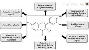 Нейропротекторные эффекты физетина.